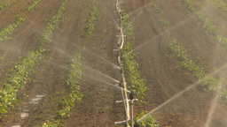 HD2009-6-26-12 strawberry field irrigation Z Stock Video Footage