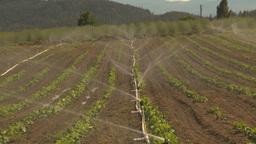 HD2009-6-26-12 strawberry field irrigation Z Stock Video Footage