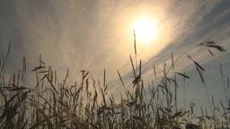 HD2009-6-32-42 windy grass and sun Stock Video Footage