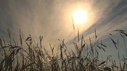 HD2009-6-32-42 windy grass and sun Footage