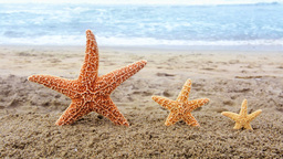 Starfish On Beach stock footage
