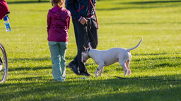 Strange Looking Dog Playing With Family In Park stock footage