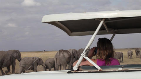 Photo from the car. Safari Footage