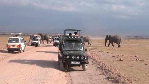 Herd Of Elephants Persekaet Road. Tourists Take Pi stock footage