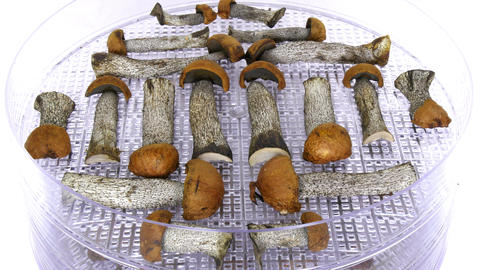 Time-lapse of drying mushrooms 1a2 (UHD-4K) Footage