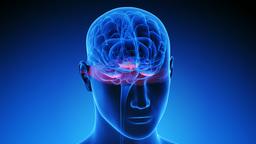 Brain scan methodology UHD 4k (looped) CG動画素材