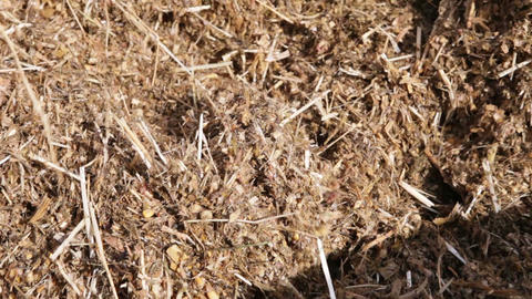 mixed fodder is produced for cows Footage
