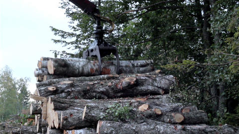 Several tiny logs are carried all at once by the b Footage