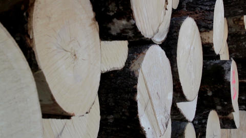 Side view image of the logs neatly piled Footage