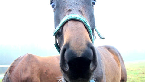 Up close view of the mouth of a horse while chewin Footage
