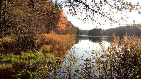 View of the lake with the forest at the side and s Footage