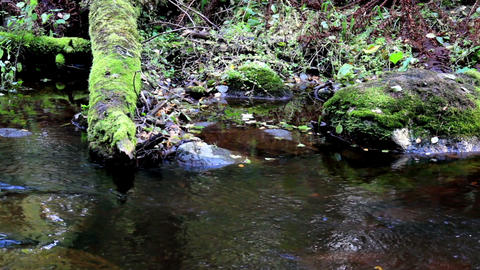 Closer view of the flowing stream Footage