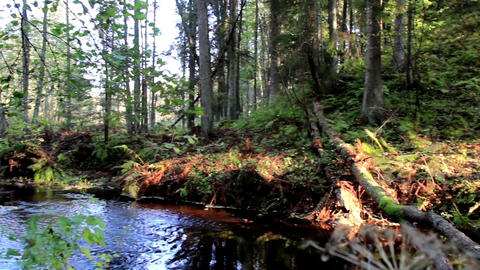 Flowing stream in the forest Footage