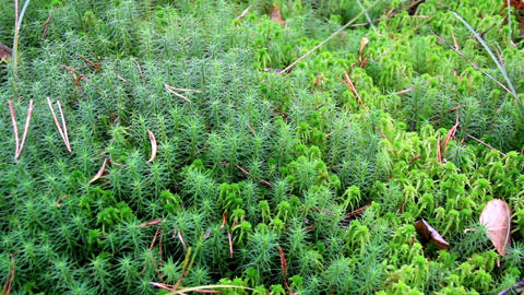 Overhead View Of The Green Shrubs Bog Swamp stock footage