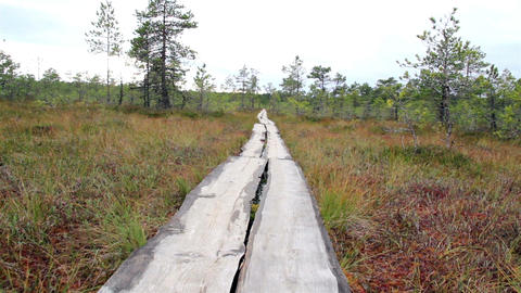 Trail within the forest on bog swamp Footage