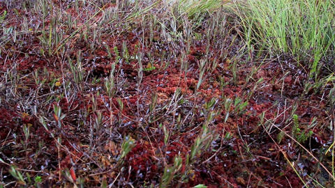 Overhead View Of The Grass On The Bog Swamp Ground stock footage