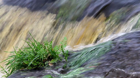Small plants growing in the middle of the rushing  Footage