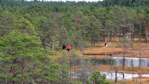 People walking on wooden trail on bog swamp Footage
