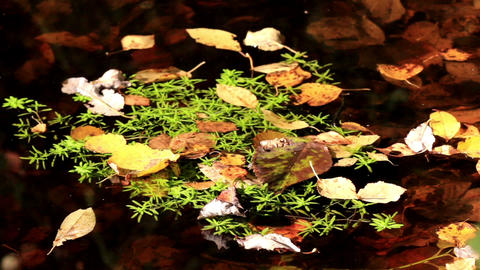 Leaves floating on top of water Footage