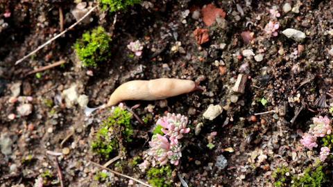 Slug crawling on wood Footage