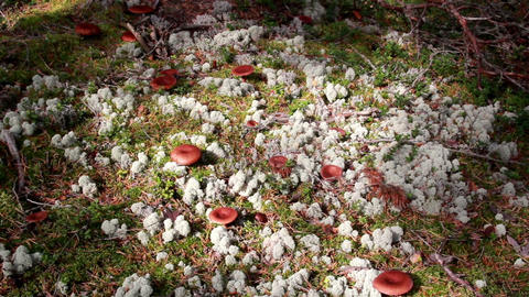 Mushrooms Growing On The Ground stock footage