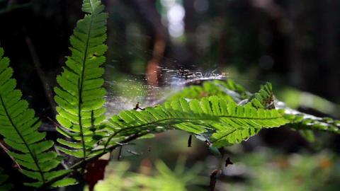 Ferns that has some spider webs in jungle forest Footage
