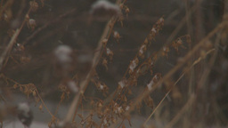 HD2009-3-2-10smooth snow falling in woods Footage