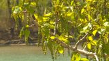 HD2009-5-7-16 Sprimgtime Tree Bloom stock footage