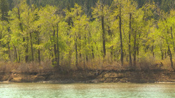 HD2009-5-7-18 forest and river spring Stock Video Footage