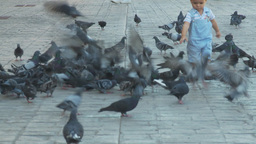 HD2009-11-3-18 child and pidgeons Footage