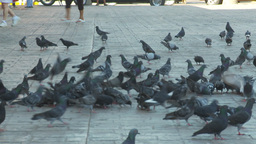 HD2009-11-3-18 child and pidgeons Stock Video Footage