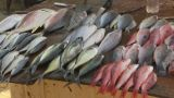 HD2009-11-7-6 Fish Sold On The Street stock footage