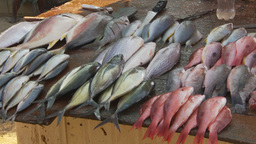 HD2009-11-7-6 fish sold on the street Stock Video Footage
