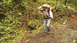 HD2009-11-8-21 guatemala man carries firewood on head Stock Video Footage