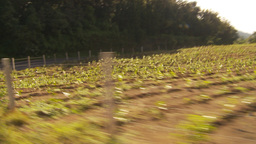 HD2009-11-8-36 guatemala drivepast farm Stock Video Footage