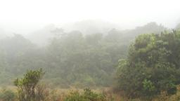 HD2009-11-11-2 rainforest tilt reveal Stock Video Footage