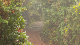 HD2009-11-11-8 mist falling on rainforest trail Stock Video Footage