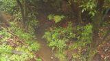 HD2009-11-11-10 Mist Falling On Rainforest Floor stock footage