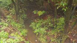 HD2009-11-11-10 mist falling on rainforest floor Footage