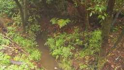 HD2009-11-11-10 mist falling on rainforest floor Stock Video Footage