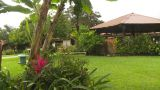 HD2009-11-11-18 Costa Rican Garden stock footage