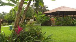 HD2009-11-11-18 Costa rican garden Footage