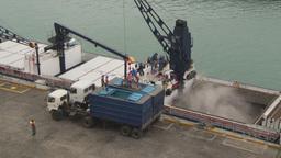 HD2009-11-12-6 unloading tuna Footage