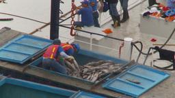 HD2009-11-12-8 refrig unloading tuna Footage