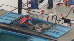 HD2009-11-12-8 refrig unloading tuna Stock Video Footage