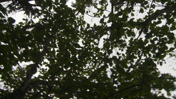 HD2009-11-12-40 jungle canopy Stock Video Footage