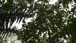 HD2009-11-12-40 jungle canopy Stock Video Footage