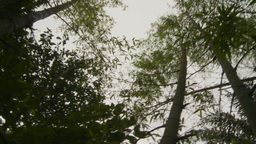 HD2009-11-12-42 jungle canopy Footage
