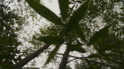 HD2009-11-12-42 jungle canopy Stock Video Footage
