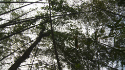 HD2009-11-12-44 jungle canopy Stock Video Footage